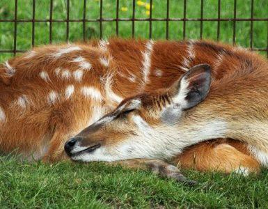 Welke dieren slapen het meest