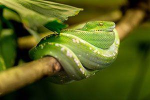 hoe slapen reptielen