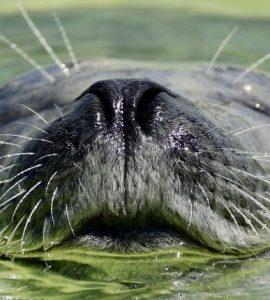 hoe slapen zeehonden